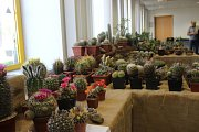 Výstava kaktusů a sukulentů v Přerově má již svoji tradici.