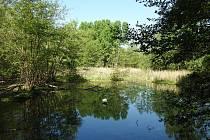 mokřady v Přerově