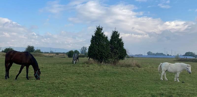 Areál dostihového závodiště v Radslavicích.