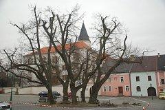Prořezávání staletých lip na Horním náměstí v Přerově. Je to jejich poslední šance na záchranu - letité stromy jsou totiž napadeny infekcí.