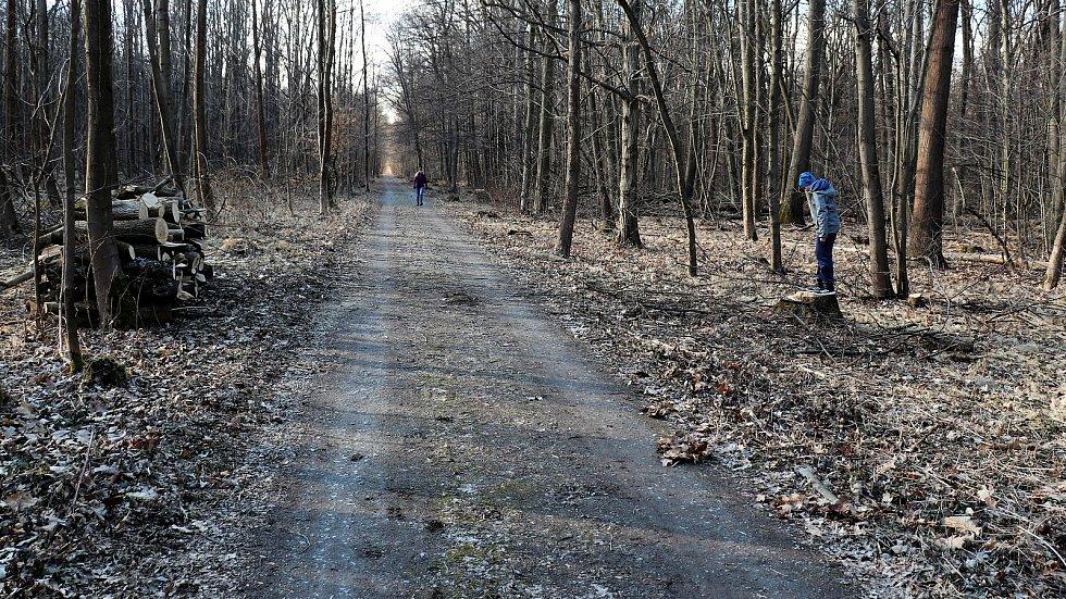 K velkému kácení dřevin došlo v Národní přírodní rezervaci Žebračka v Přerově, kde padly stovky jasanů. Byly napadeny voskovičkou jasanovou, která ničí dřeviny v celé Evropě. Vlastníkem lesního hospodářského celku o výměře 217 hektarů je město.