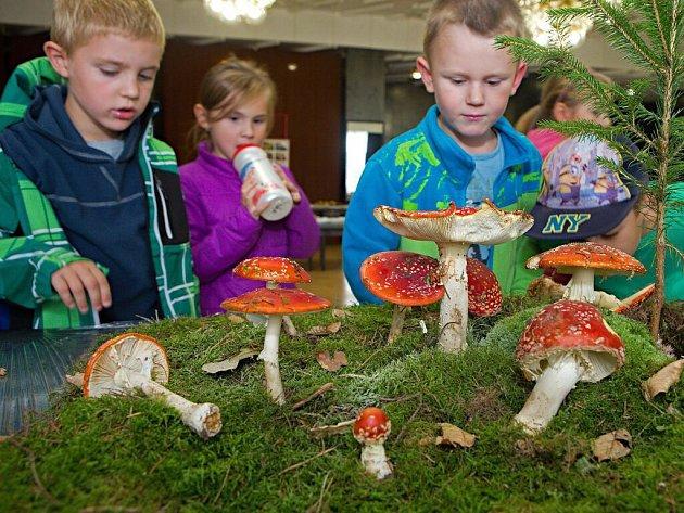 Mykologická výstava v přerovském klubu Teplo