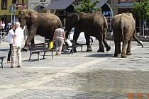 O rozruch se postarali sloni, kteří se v doprovodu ošetřovatelů osvěžili v kašně na náměstí T. G. Masaryka.