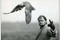 Profesionální sokolník Pavel Palacký se svým rarohem Bukem na fotografii z roku 1990