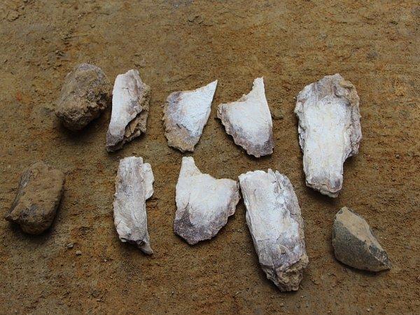 Přerovští archeologové narazili při výkopech vPředmostí na zbytky mamutích kostí, staré 20až 30tisíc let.