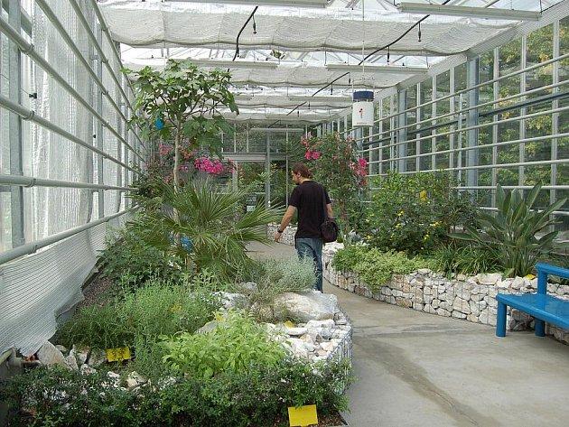 V rámci Dnů evropského dědictví na Přerovsku mohli tuto sobotu navštívit milovníci květin i Subtropický skleník v přerovském parku Michalov. Ten obsahuje více než 70 druhů rostlin. Ty jsou vysazeny ve speciálních vyvýšených záhonech lemovaných zídkami. Do
