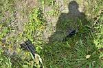 Tragická nehoda, při které zemřely dvě mladé dívky se stala v sobotu večer v Lipnické ulici v Přerově. K nehodě došlo v místech, kudy si lidé zkracují cestu.