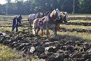 Foto: Vojtěch Podušel. Mistrovství republiky v orbě, které se konalo na poli u Prosenic na Přerovsku, přálo v sobotu počasí.