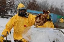 Na likvidaci chovu drůbeže v Lověšicích, kde vypukla ptačí chřipka, se v sobotu podíleli pracovníci Krajské veterinární správy v Olomouci spolu s hasiči.