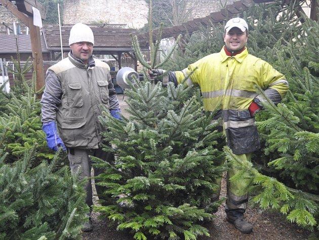 V Mostní ulici v Přerově zahájili prodej stromů počátkem prosince.