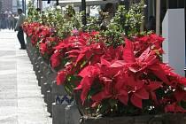 Mexiko. Vánoční hvězdy lemující ulice Puebly