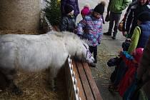 Kromě koní si návštěvníci mohou každoročně v areálu školy prohlédnout také netradiční betlém zhotovený ze slámy.