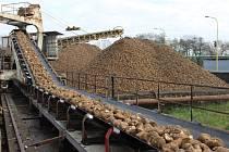 Řepná kampaň jede v areálu prosenického cukrovaru na plné obrátky.