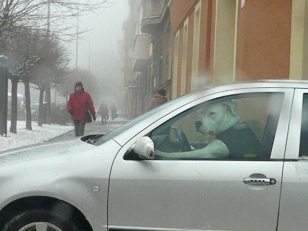 Zvláštního šoféra, který parkoval jako zvíře, zaregistrovali ve středu dopoledne v Komenského ulici v Přerově strážníci.
