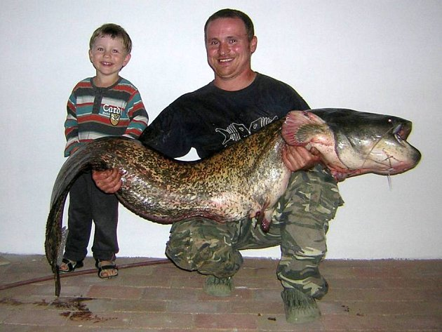 Vladimír Hrabal z Radslavic chytil v pátek 22. června o půl desáté večer obrovského sumce o váze 35 kilogramů a délce 180 centimetrů.