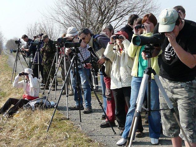 Ornitologové lákají na Evropský festival ptactva, který se uskuteční v sobotu 30. září u Hradeckého rybníku v Tovačově
