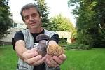 Unikátním nálezem mykologa Jiřího Polčáka je letos kuřátko rýhonohé (na snímku žlutá houba vpravo)