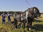 Mistrovství republiky v orbě, které se konalo na poli u Prosenic na Přerovsku, přálo v sobotu počasí.