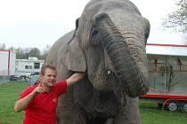 slonice Naira pózuje s ředitelem cirkusu Jiřím Berouskem ml.
