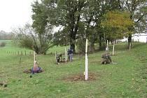 Obnova stromových alejí v Dřevohosticích