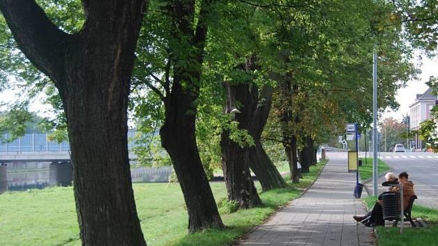 Alej na nábřeží E. Beneše v Přerově