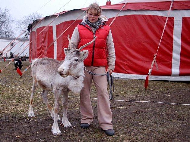 Na přerovské výstaviště přijel Cirkus Berosini a s ním pětadvacet zvířat