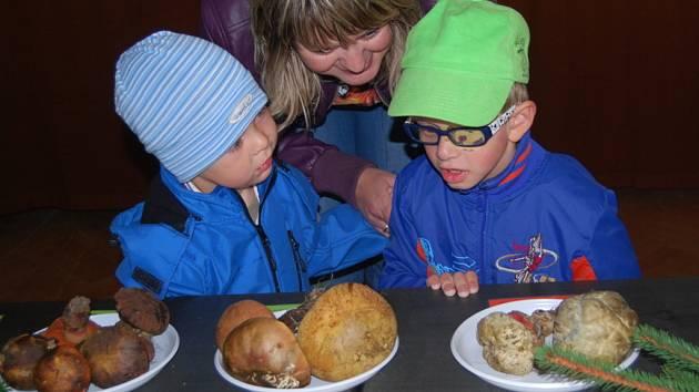 Více než tisícovka návštěvníků zavítala v pátek a v sobotu na tradiční výstavu hub, která se konala už popatnácté v klubu Teplo na Horním náměstí v Přerově.