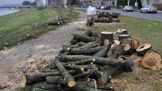 Stromová alej na nábřeží Edvarda Beneše už je minulostí – musela ustoupit stavbě protipovodňové zídky.