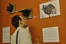 Dvě nové výstavy Ve městě to žije a Pod jednou střechou v ornitologické stanici stanici Ornis
