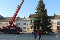 Vánoční strom přivezli na Masarykovo náměstí v Přerově pracovníci technických služeb. Letos putuje do centra města z Jižní čtvrti III.