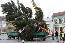 Usazování vánočního stromu na přerovském náměstí TGM