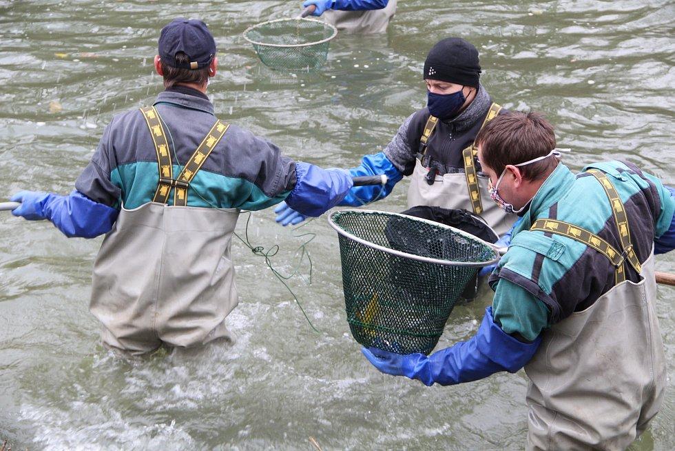 Vědci zjišťují, zda je v Bečvě po otravě kyanidem život - výzkum v Přerově u jezu v Dluhonicích, 15. listopadu 2020