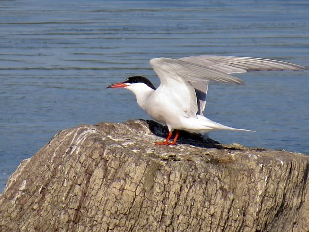 Hnízdiště ohrožených ptáků v Tovačově