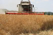 Žně na Přerovsku – zemědělci z Kokor sklízejí úrodu řepky