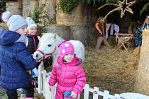 Tradiční krmení koní na Štědrý den ve Střední školy zemědělské vPřerově