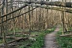 V Národní přírodní rezervaci Žebračka v Přerově je velké množství popadaných stromů.