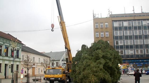Vánoční strom dovezli na náměstí T. G. Masarka v Přerově v sobotu okolo čtrnácté hodiny. Smrk vysoký zhruba dvaadvacet metrů absolvoval cestu z Potštátska.