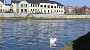 Vody je v řece Bečvě v Přerově méně než v uplynulých letech, potvrzují vodohospodáři. 31.3.2017