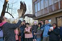 V Ornitologické stanici v Přerově začala nová sezonní výstava s názvem Dravci, sokoli a sovy. Po slavnostní vernisáži vypouštěli ornitologové do volné přírody káni, jež utrpěla zranění a starali se o ni v záchranné stanici pro handicapované živočichy.