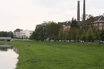 Alej na přerovském nábřeží Edvarda Beneše brzy prořídne, důvodem zásahu je stavba protipovodňové zídky.