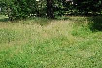 Tráva v Přerově. Ilustrační foto