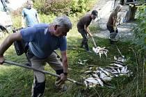 Uhynulé ryby z Bečvy v Hustopečích - Rybáři nakládají leklé ryby z řeky Bečvy 21. září 2020 v Hustopečích nad Bečvou na Přerovsku.
