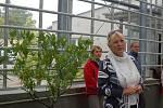 Subtropický skleník v přerovském parku Michalov