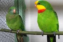 Přerovské výstaviště obsadila výstava drobného zvířectva