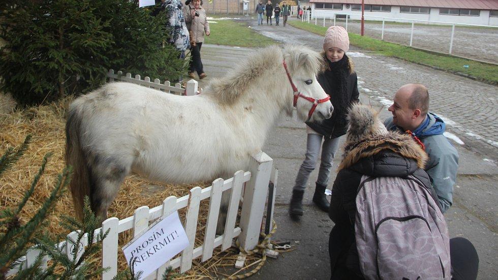 Přerované byli i letos štědří. Koním na Štědrý den přinesli mrkev, jablka i suchý chleba. Foto: