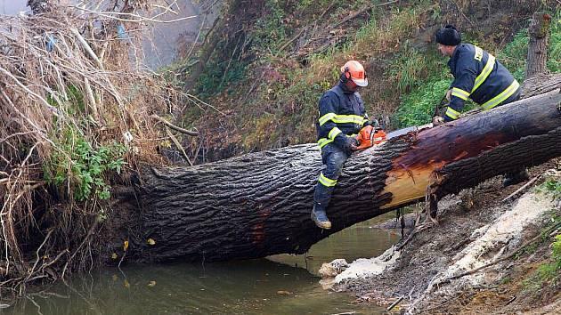 Odstraňování popadaných stromů z koryta Bečvy. Ilustrační foto