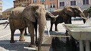V kašně na Masarykově náměstí v Přerově se před polednem osvěžili tři sloni.