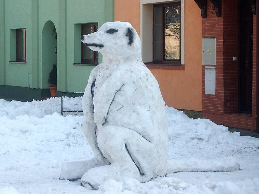 Sněhový klokan v Bochoři