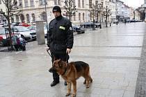 Spřerovskými strážníky chodí do služby psi, kteří se jmenují Avar, Donar a Argo. Nejmladšího – ročního Volfa - teprve čekají zkoušky. Od čtvrtku 23. února je novou posilou také německý ovčák Chaka Warpeco.