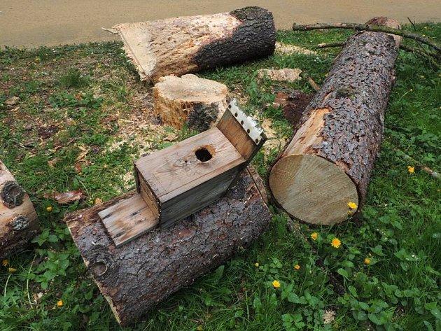 Kácení stromů, které nyní probíhá v přerovském parku Michalov, bohužel není podle ornitologů šetrné. Za své vzala ptačí budka i s mláďaty.